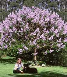 {https://www.philadelphia-reflections.com/images/Empresstree.jpg}
