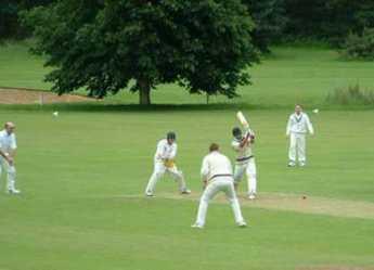 {https://www.philadelphia-reflections.com/images/cricket.jpg}